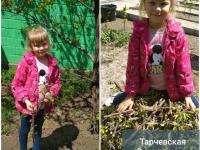 """Фотоотчет недели""""Мы сажали огород""""  с нашими """"Непоседами"""", """"Улыбкой"""" и """"Радугой"""""""